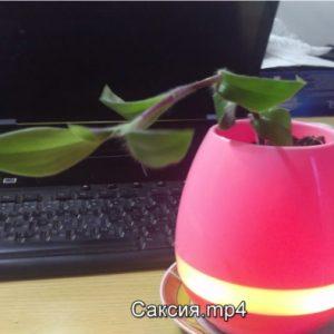 Музикално цвете тонколона